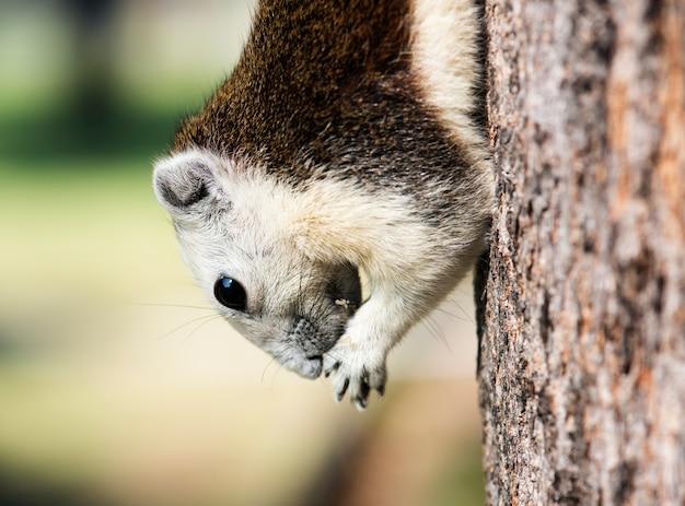 Adorable ardilla en el árbol