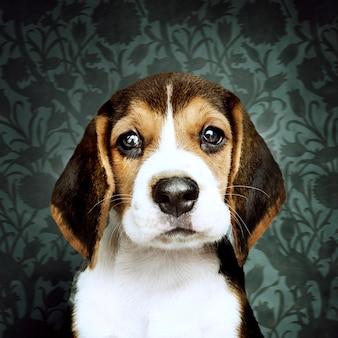 Adorable beagle cachorro solo retrato