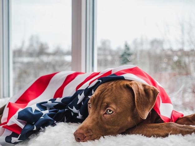 Adorable y bonito cachorro de color chocolate.