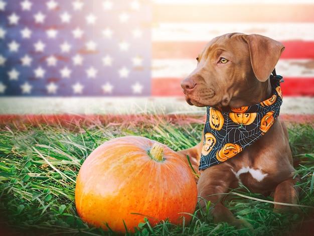 Adorable y bonito cachorro de color marrón. de cerca