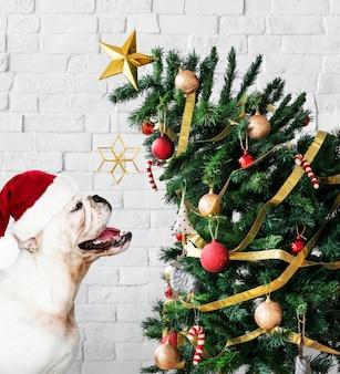 Adorable bulldog cachorro de pie junto a un árbol de navidad