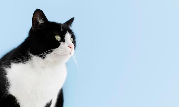Adorable gatito blanco y negro con pared monocromática detrás de ella