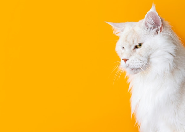 Adorable gatito blanco con pared monocromática detrás de ella