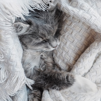 Adorable gatito gris y esponjoso dormido suavemente.