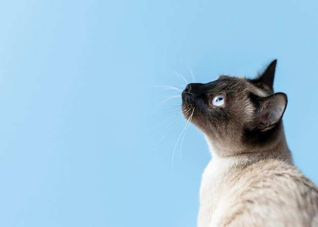 Adorable gatito con pared monocromática detrás de ella