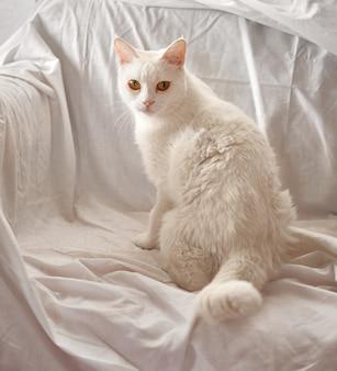 Un adorable gato blanco doméstico sentado en un sofá cubierto con una sábana blanca