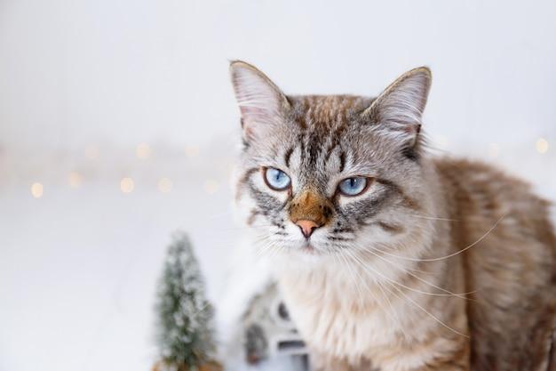Adorable gato cerca de adornos navideños