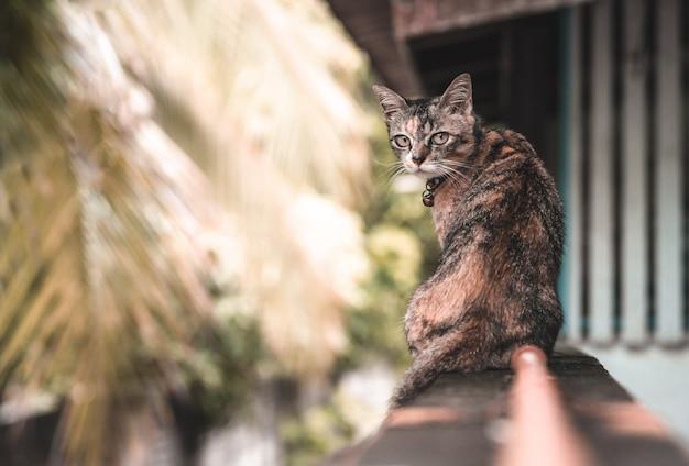 Un adorable gato doméstico con color leopardo sentado en la valla de la casa.