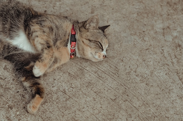 Adorable gato doméstico marrón relajante en el piso