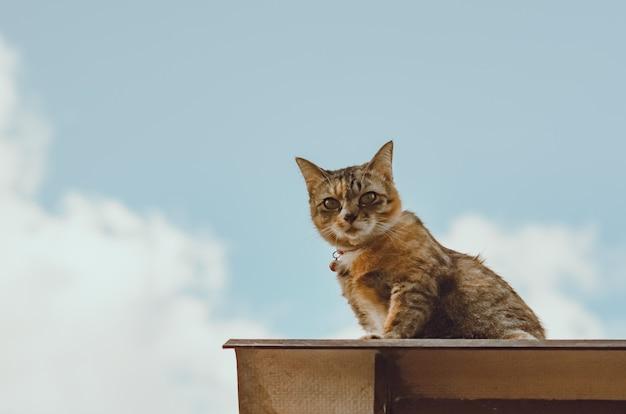 Adorable gato doméstico marrón sentado en el techo