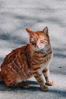 Adorable gato naranja sentado sobre una superficie de hormigón