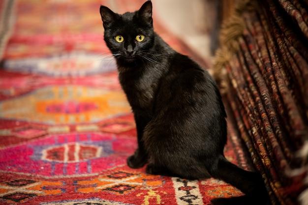 Adorable gato negro en la alfombra