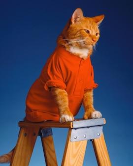 Adorable gato con ropa roja sentado en una escalera de madera