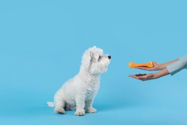 Adorable perrito blanco aislado en azul