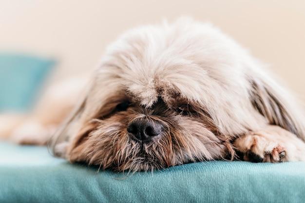 Adorable perrito relajante
