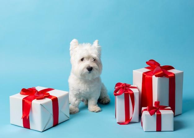 Adorable perro blanco con regalos