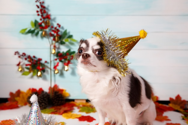 Adorable perro chihuahua con un sombrero cónico de año nuevo en festivo.