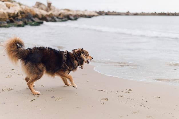 Adorable perro feliz de jugar en la playa.