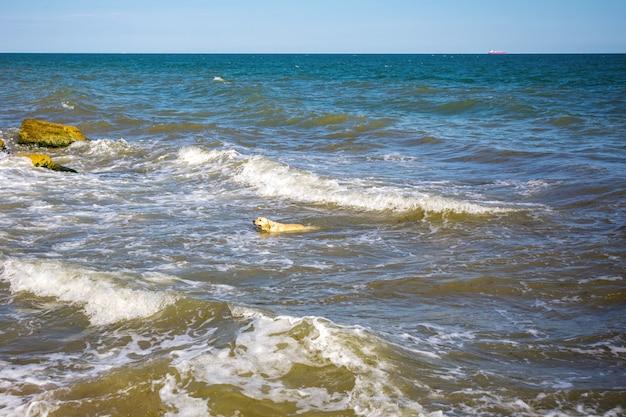 Adorable perro nadando en el agua de mar