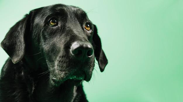 Adorable perro negro