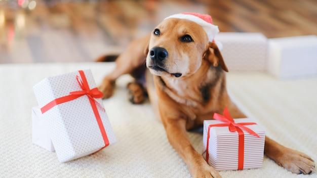 Adorable perro con regalos celebrando la navidad en casa.