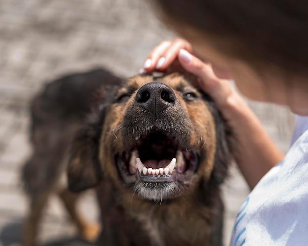 Adorable perro de rescate siendo mascota por mujer en refugio