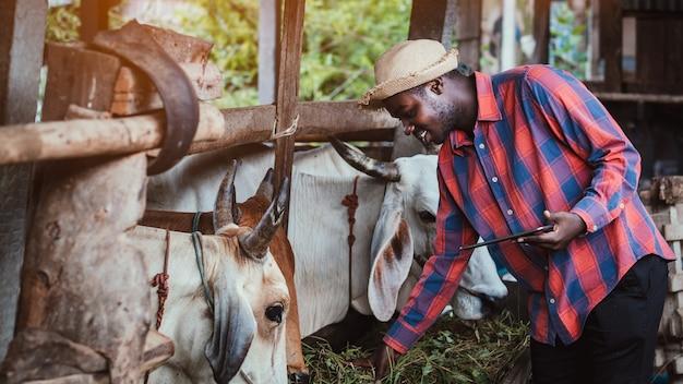 Agricultor africano investigando y registrando detalles en la tableta de cada industria de la vaca en una granja.concepto de agricultura o cultivo
