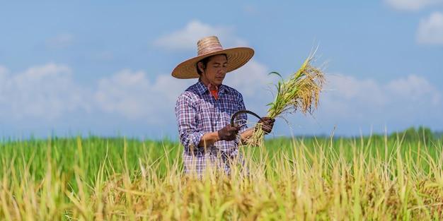Agricultor asiático trabajando en el campo de arroz bajo un cielo azul