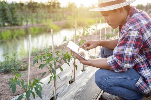 Agricultor asiático usando tableta y comprobando su planta o vegetal (árbol de chile)