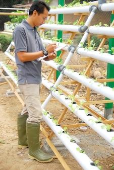 Agricultor controla el crecimiento de verduras orgánicas.