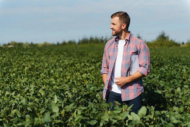 Un agricultor inspecciona un campo de soja verde. el concepto de la cosecha