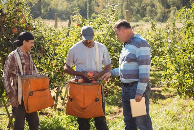 Agricultor interactuando con agricultores en huerto de manzanas