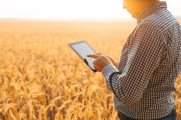 Agricultor revisa el campo de cereales y envía datos a la nube desde la tableta.