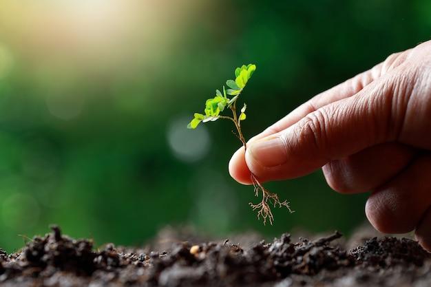 Agricultor siembra a mano brote en suelo fértil.