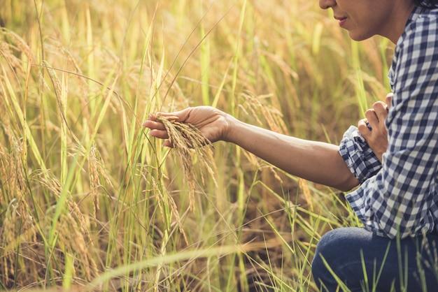 El agricultor tiene el arroz en la mano.