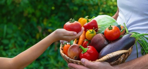 Un agricultor tiene verduras en sus manos y un niño. enfoque selectivo. comida.