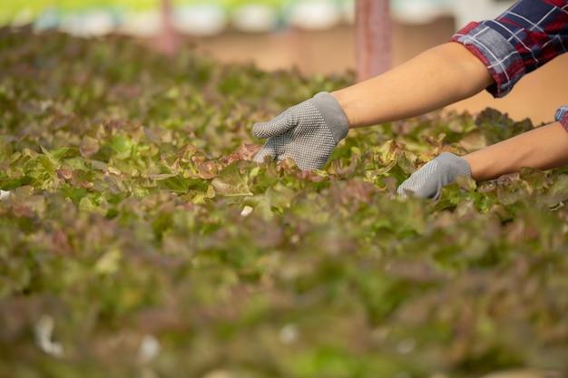 Agricultores asiáticos que trabajan en la granja hidropónica de verduras con felicidad. retrato de mujer agricultora que controla la calidad de la ensalada verde con una sonrisa en la granja de la casa verde.