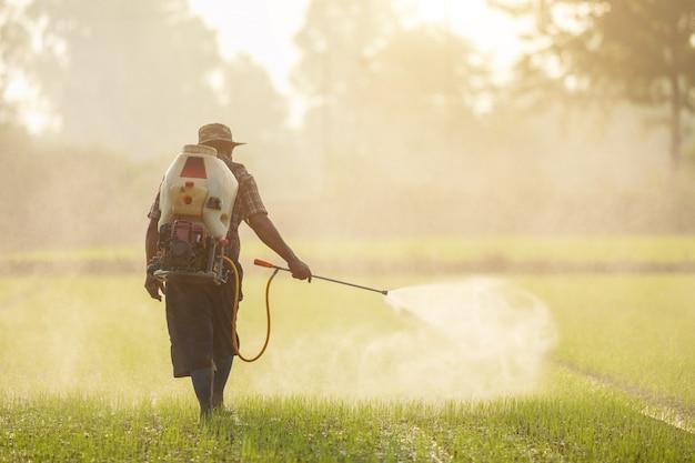 Agricultores asiáticos rociando fertilizante al joven campo de arroz verde