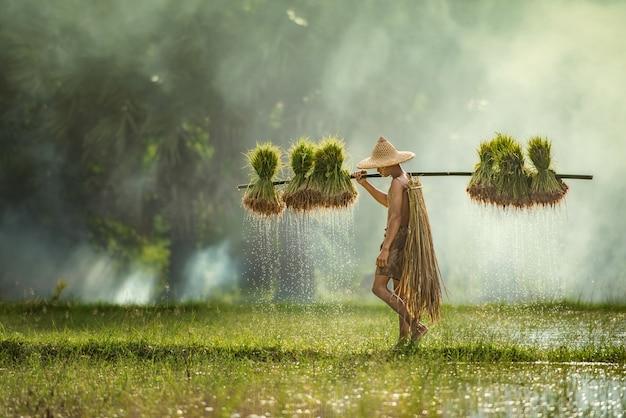 Los agricultores cultivan arroz en la temporada de lluvias. estaban empapados con agua y barro para prepararse para plantar, sakonnakhon tailandia