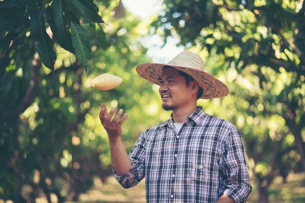 Los agricultores están comprobando la calidad del mango, el concepto de los jóvenes famers inteligentes