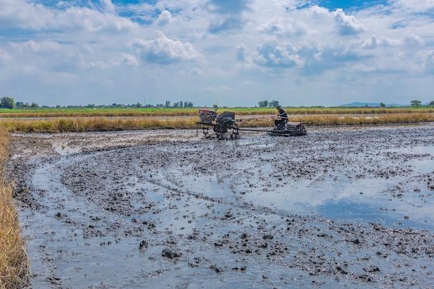 Los agricultores están preparando el suelo para cultivar arroz.
