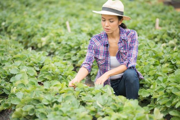 Los agricultores están trabajando en la granja de fresa