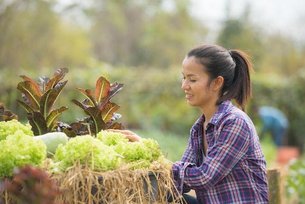 Los agricultores están trabajando en la granja de lechuga de roble verde