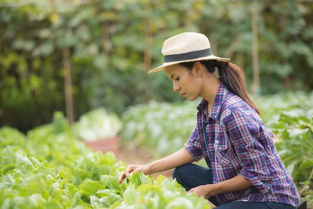Los agricultores están trabajando en la granja de repollo chino