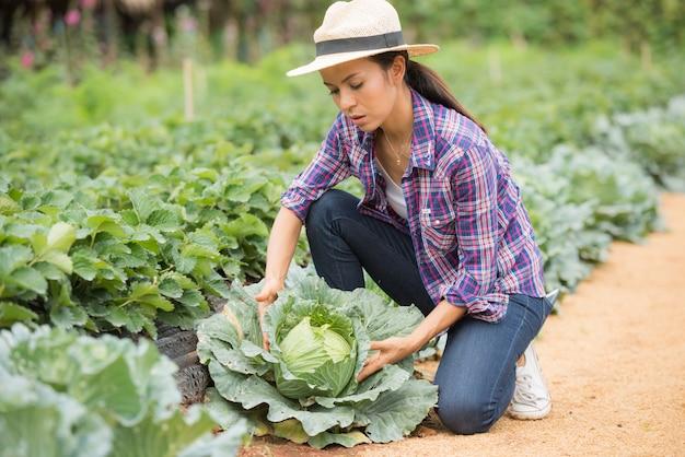 Los agricultores están trabajando en la granja de repollo