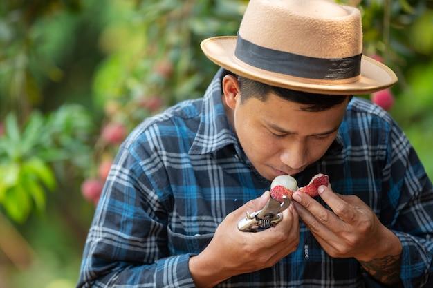 Los agricultores examinan lichi, lichi en el jardín.