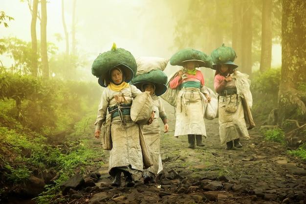 Los agricultores recogiendo té van a casa después de la granja