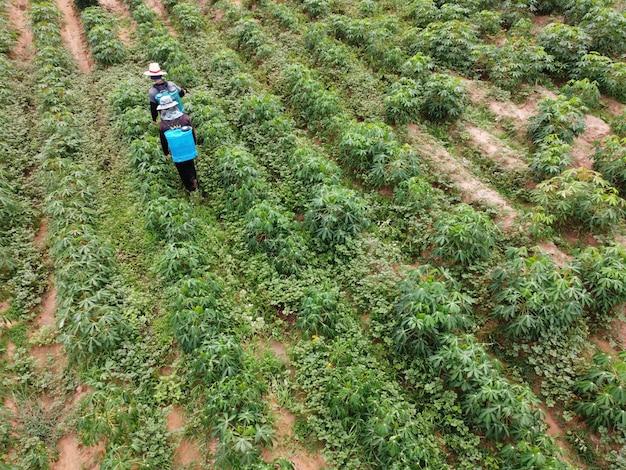 Los agricultores rocían pesticidas tóxicos en las parcelas agrícolas.