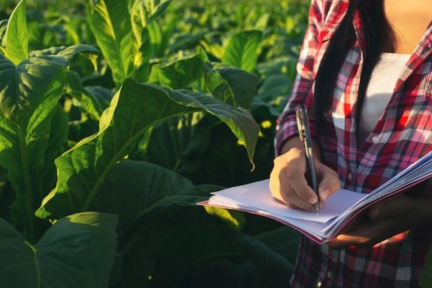 Los agricultores tienen cuadernos de cheques modernos de tabaco.