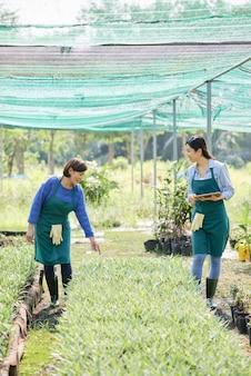 Agricultores trabajando en invernadero